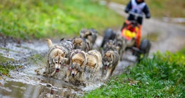 Mezinárodní závod psích spřežení Reingers - Veclov