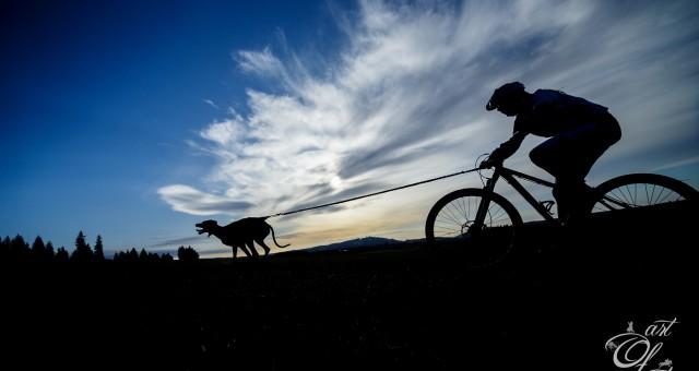 MČR psích spřežení na suchu 2019